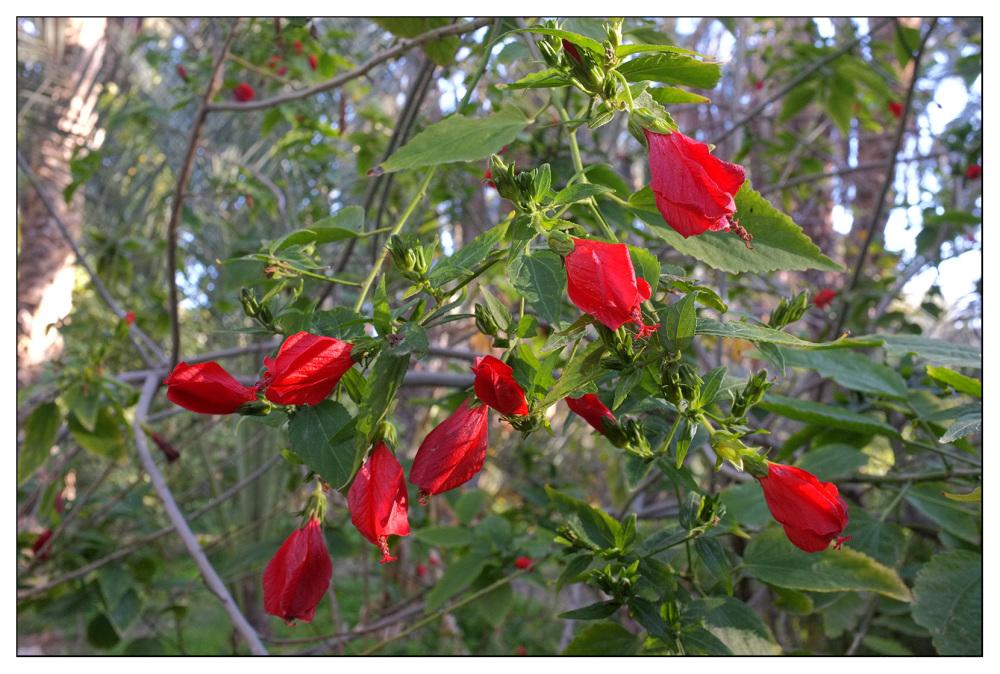 oasis desert red flowers
