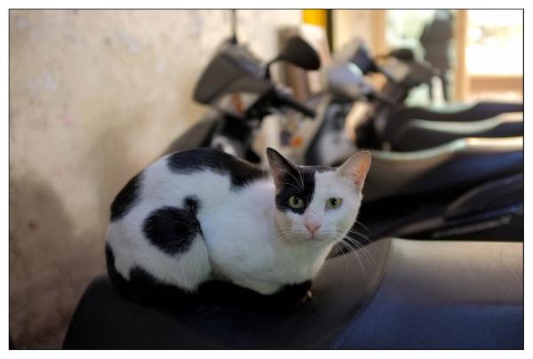 Medina Cat, Sousse