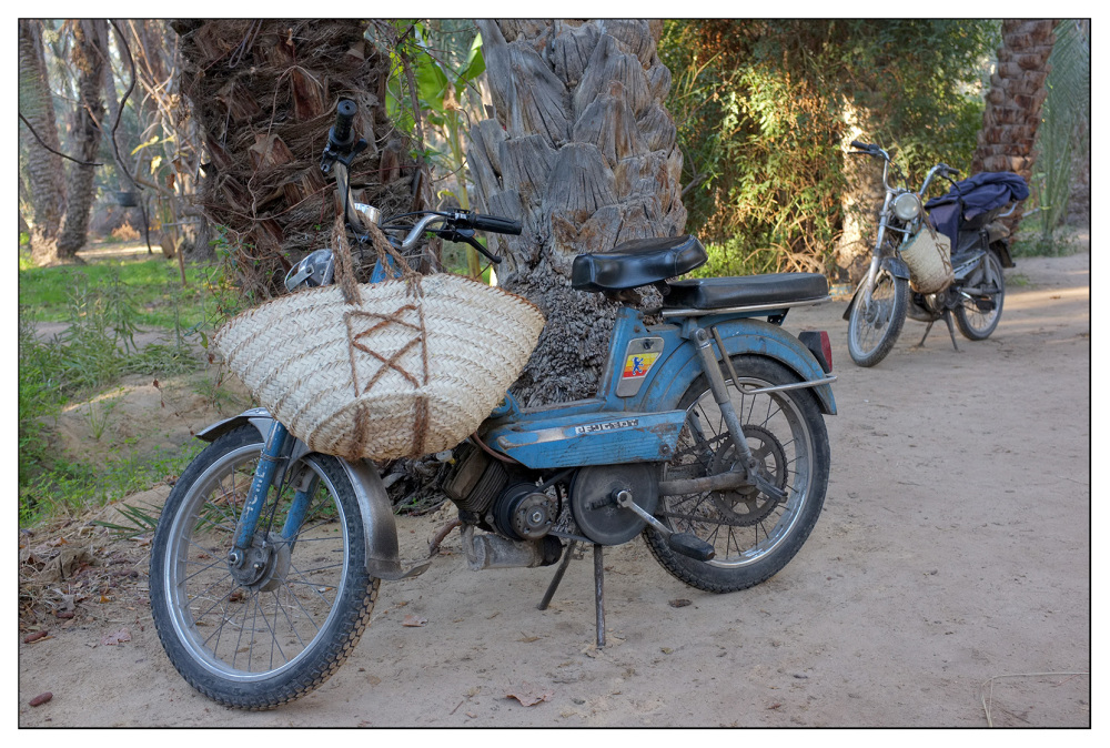 scooter transport oasis travel