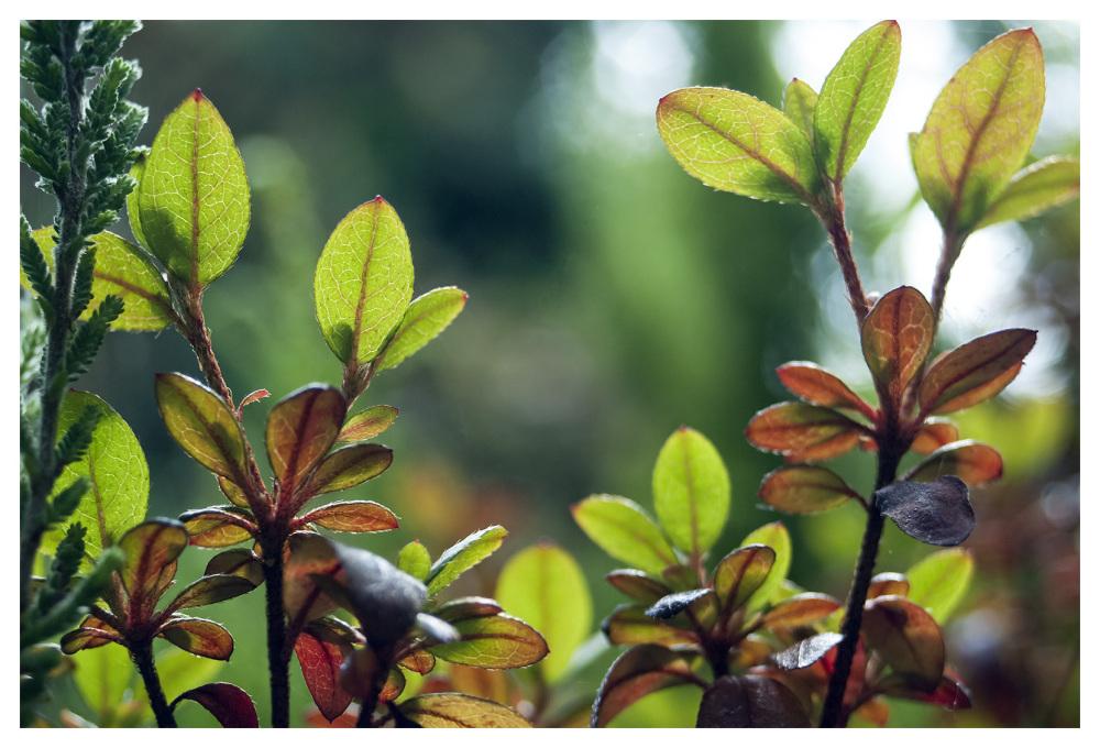 little leaves most interesting garden belper