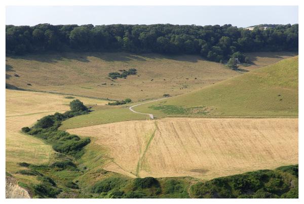 dorset landscape summer fields woods