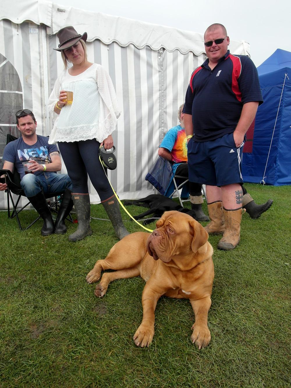 festival mutts ely folk festival dogs