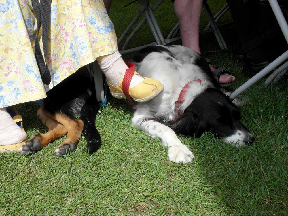 festival mutts ely folk festival dogs