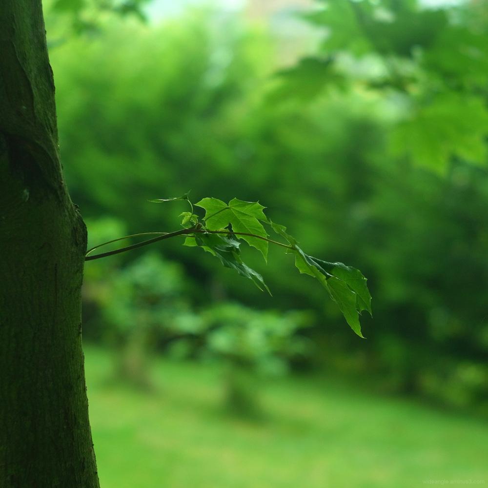 little branch jupiter8 russian lenses