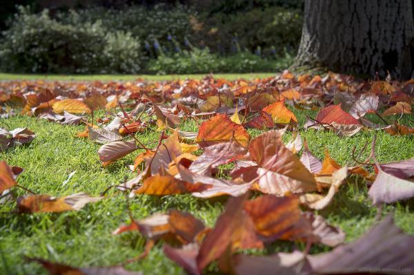 signs autumn leaves change colour