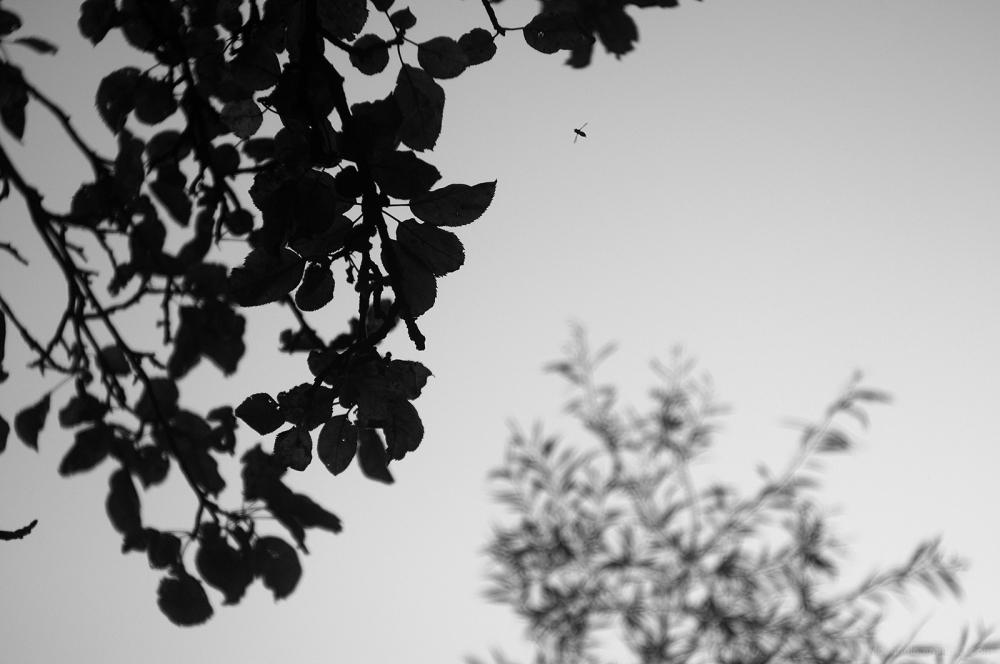 flight little fly crosses space