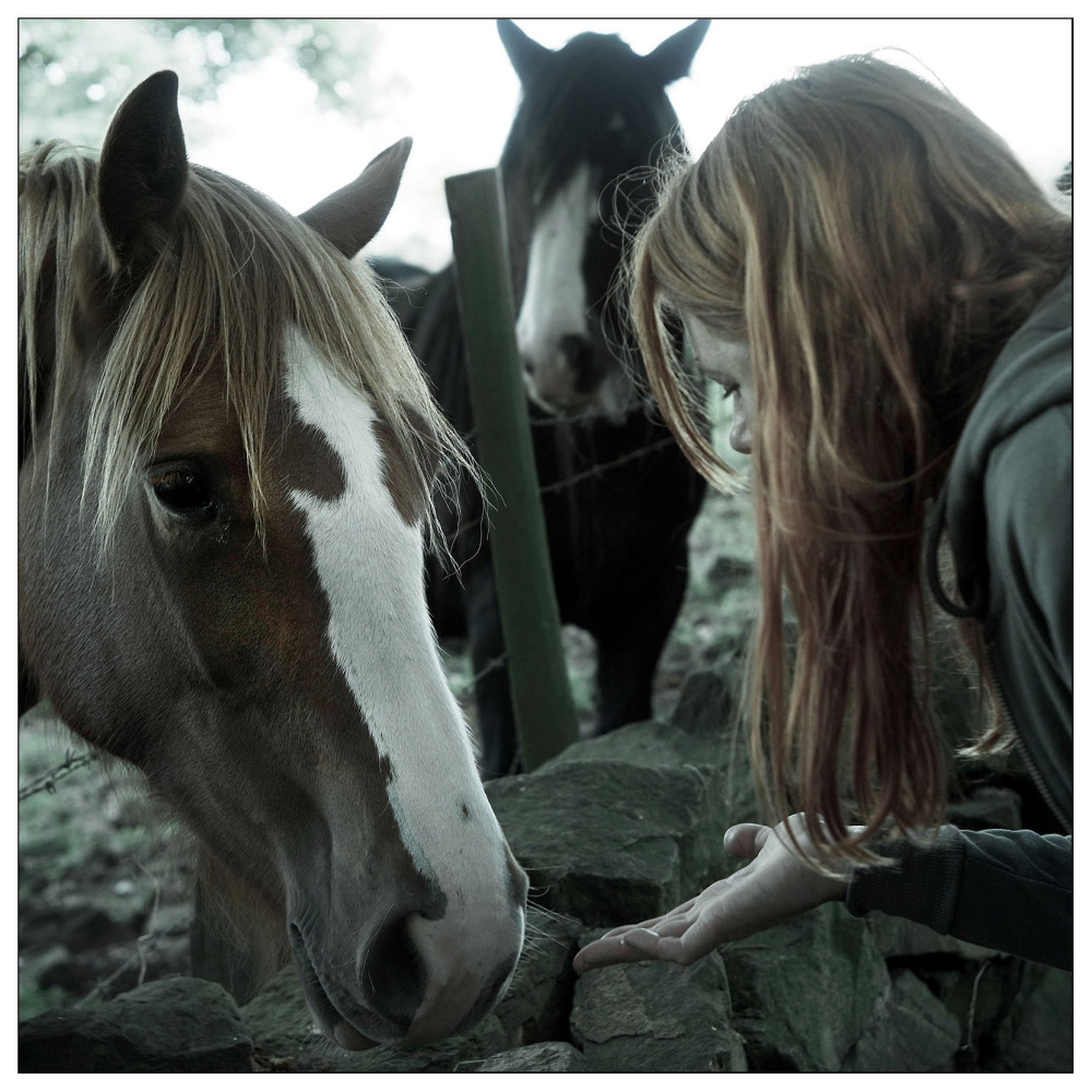 red heads meeting woods horse kitty belper