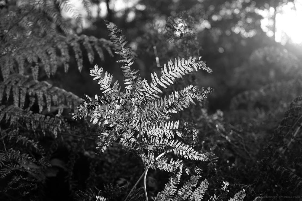 bracken autumn curled dry beacon hill