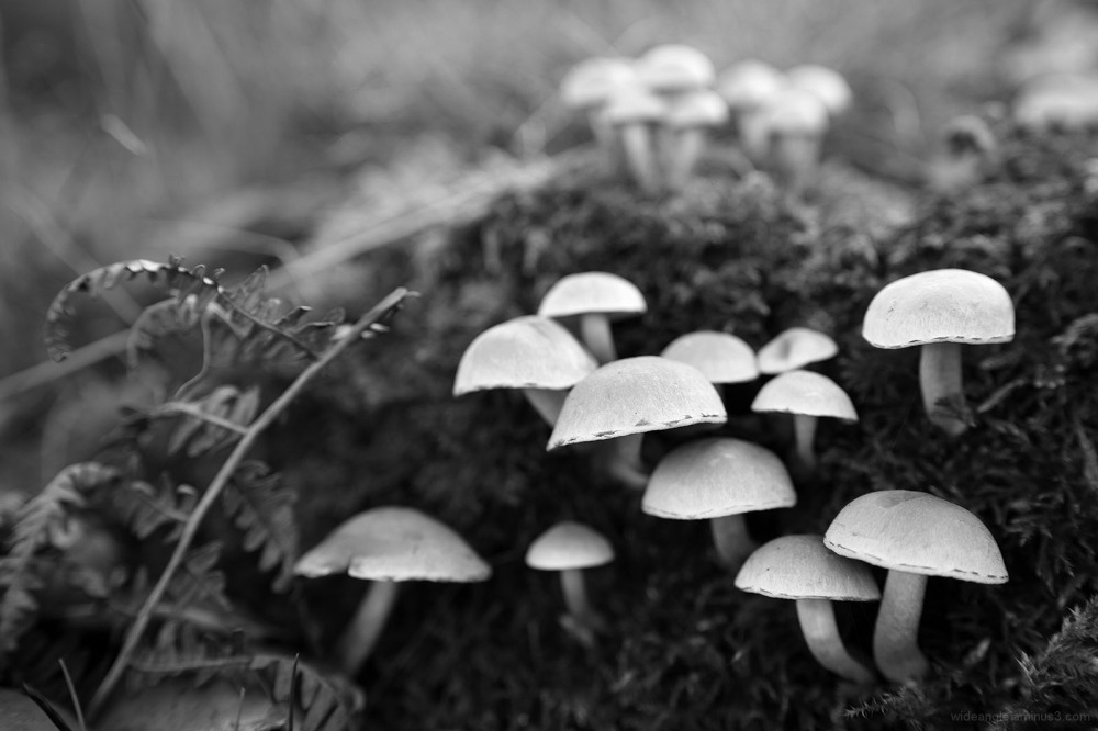 fungi mushroom toadstool fairy ring
