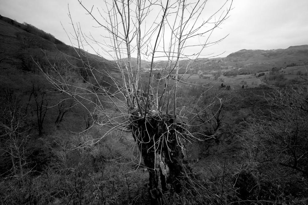 stark november tree twigs leafless wet