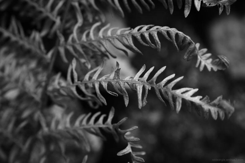bracken shapes nature winter dry