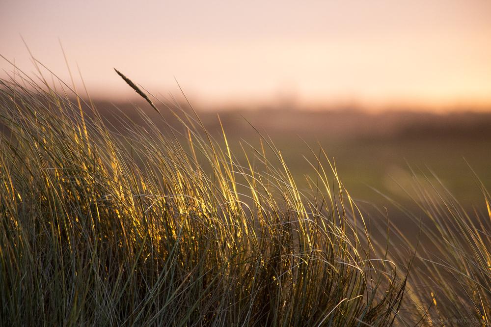 sunset grasses coastline norfolk horsey gap