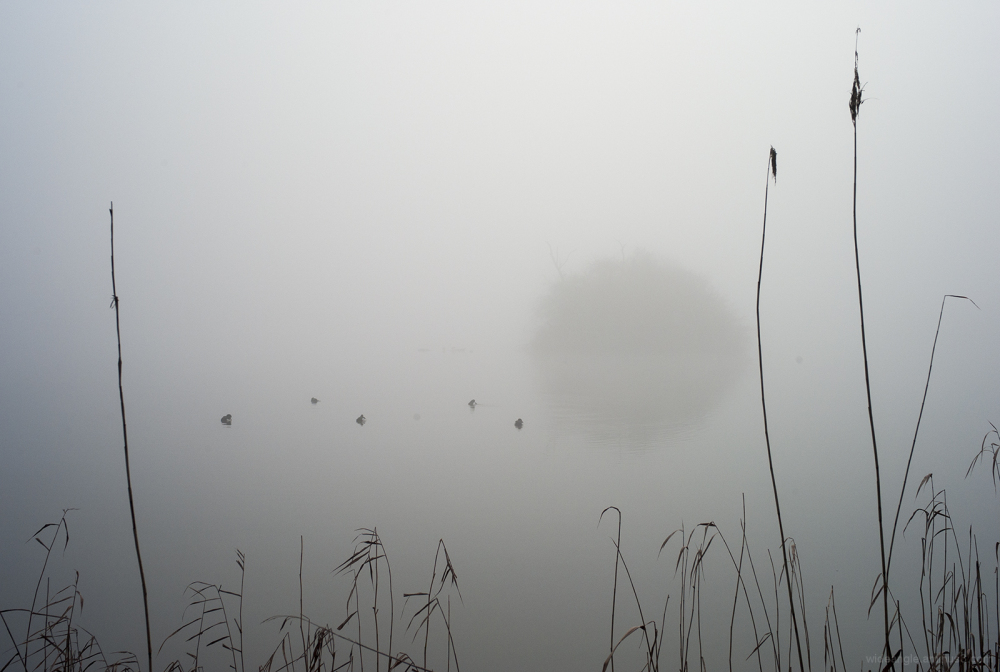 misty foggy cold winter attenborough lakes rivers
