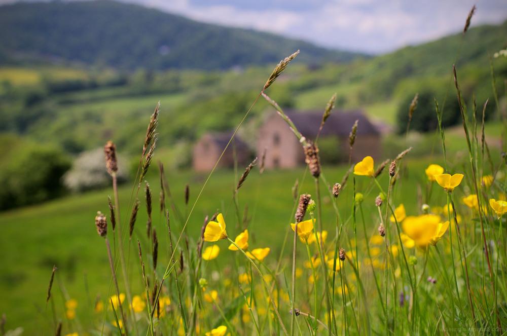 buttercups cromford lea mills barn fields matlock