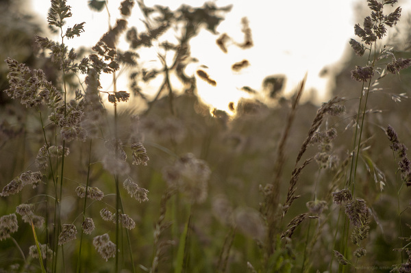 Through the Wild Grasslands