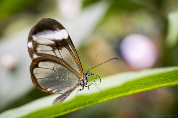butterfly house tropical sheffield