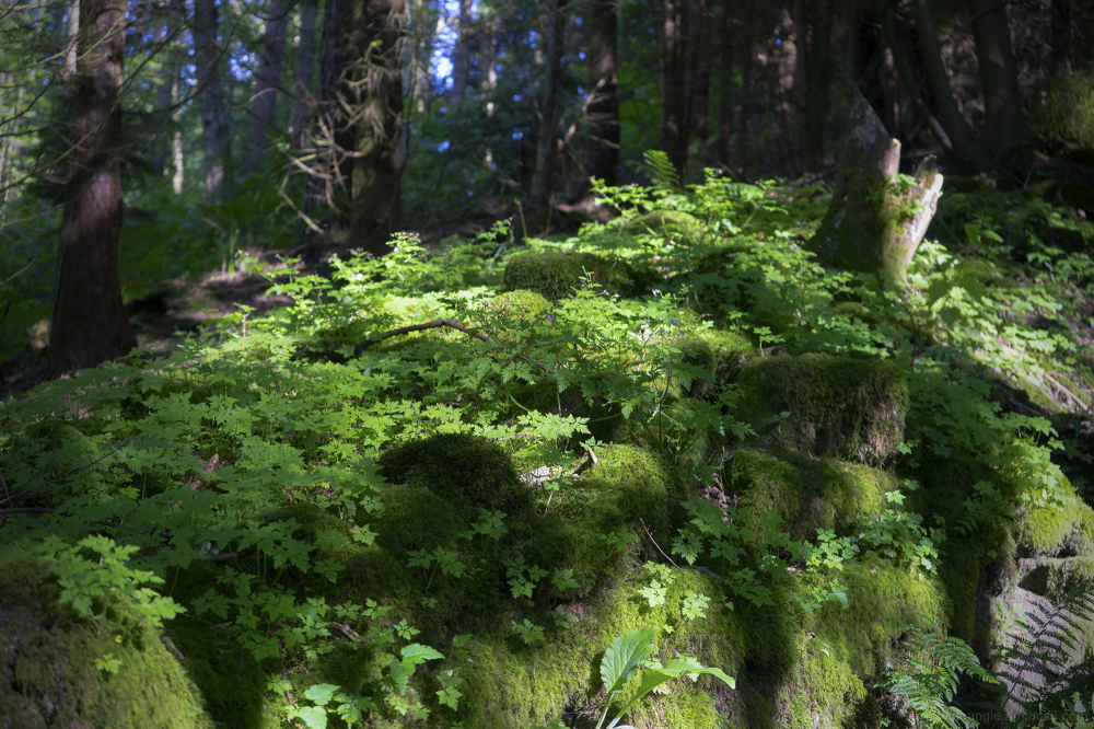 woodland green vegetation glade peakdistrict