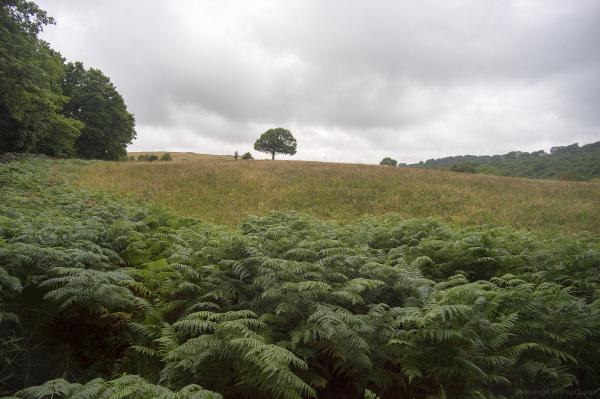 lone tree one derbyshire