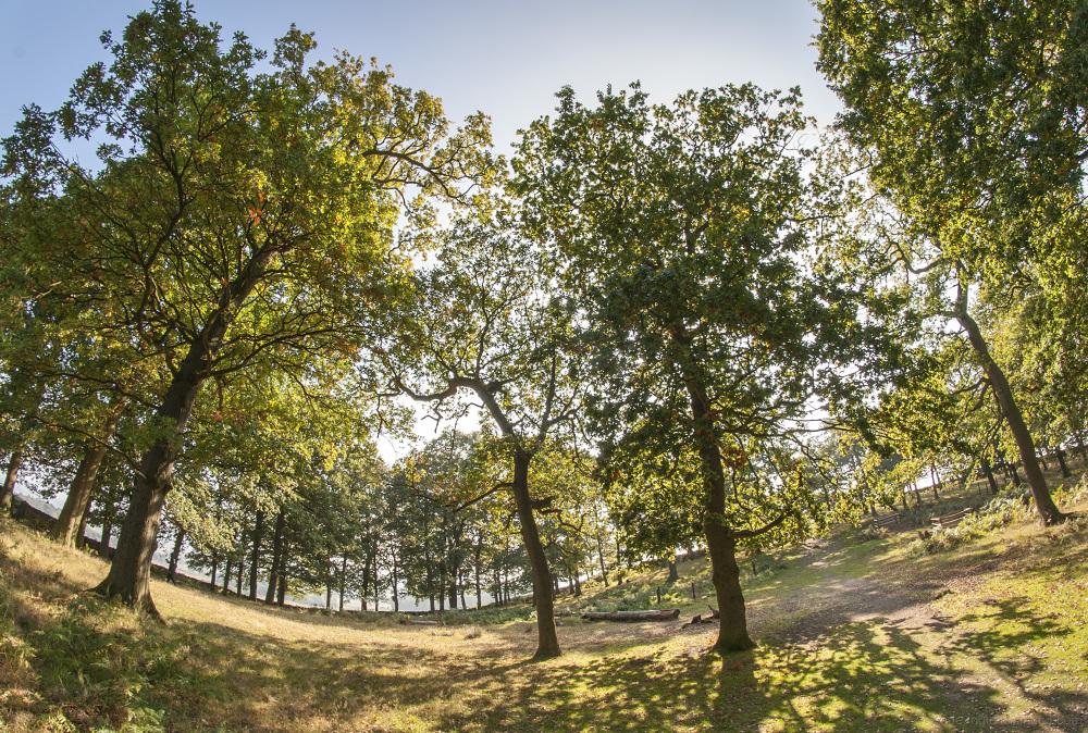 bradgate park woodland glade