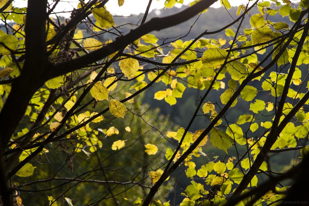start autumn leaves yellow sunlight