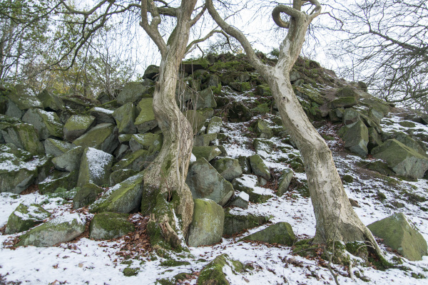 Rocks & Tortured Trees