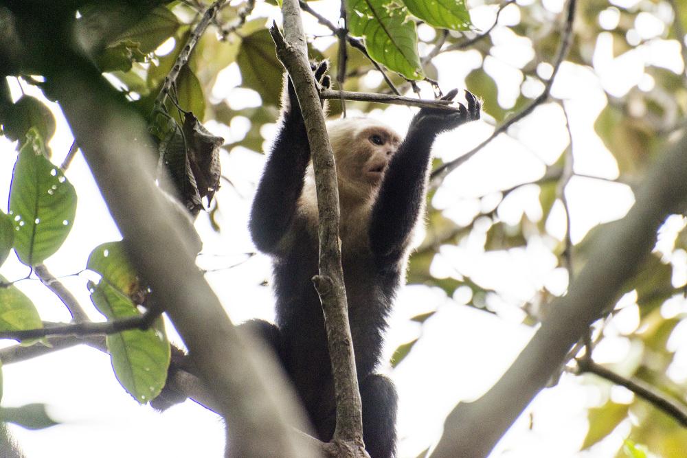costa rica jungle forest guanacaste