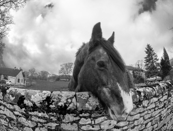 derbyshire youlgreave horse wall