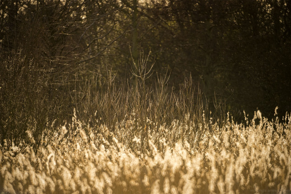 Reeds & Trees at 500mm