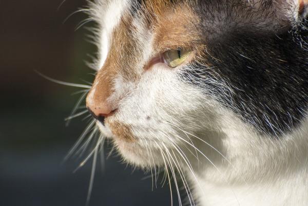 cats jezebel eyes concentration