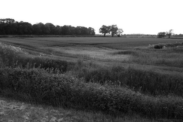 shardlow fields evening walk