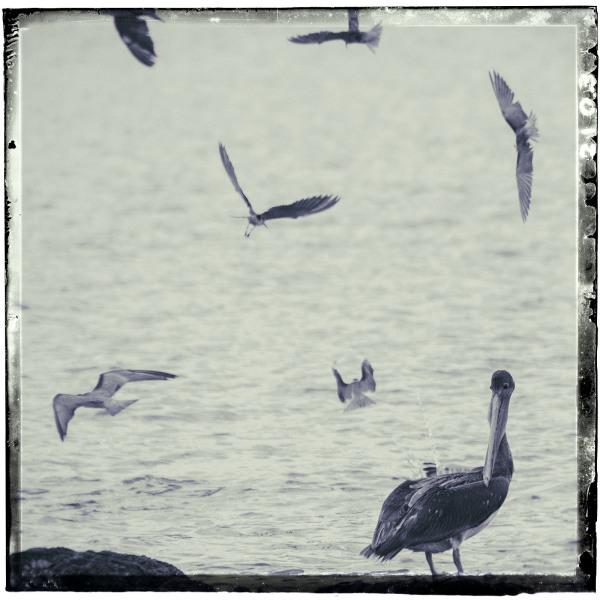 Wings as Wet Plate