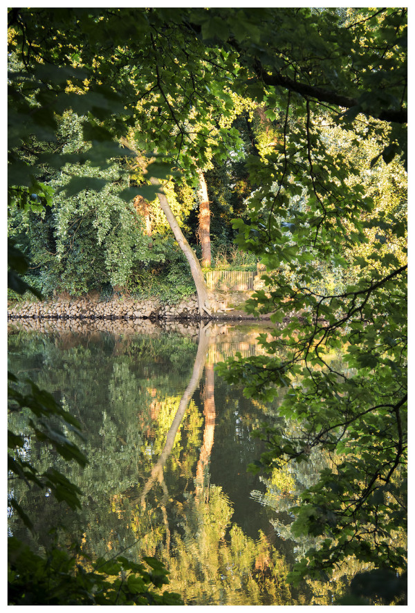 reflection water river trent shardlow