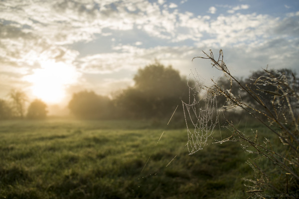 Aminus3 Featured photo Webs at Sunrise at Shardlow | 14 September 2016