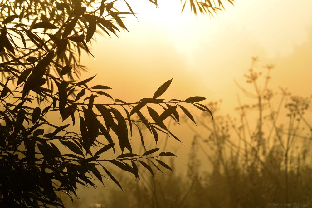 sunrise shardlow september willows
