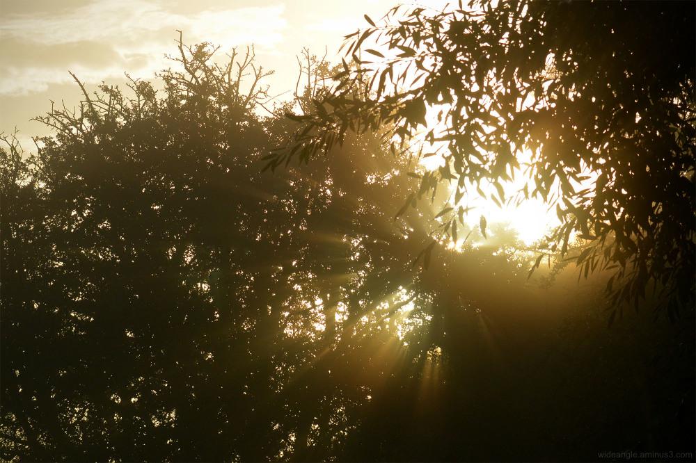 sunrise shardlow september trees