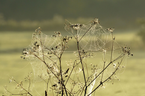 spider web dew glow wildlife