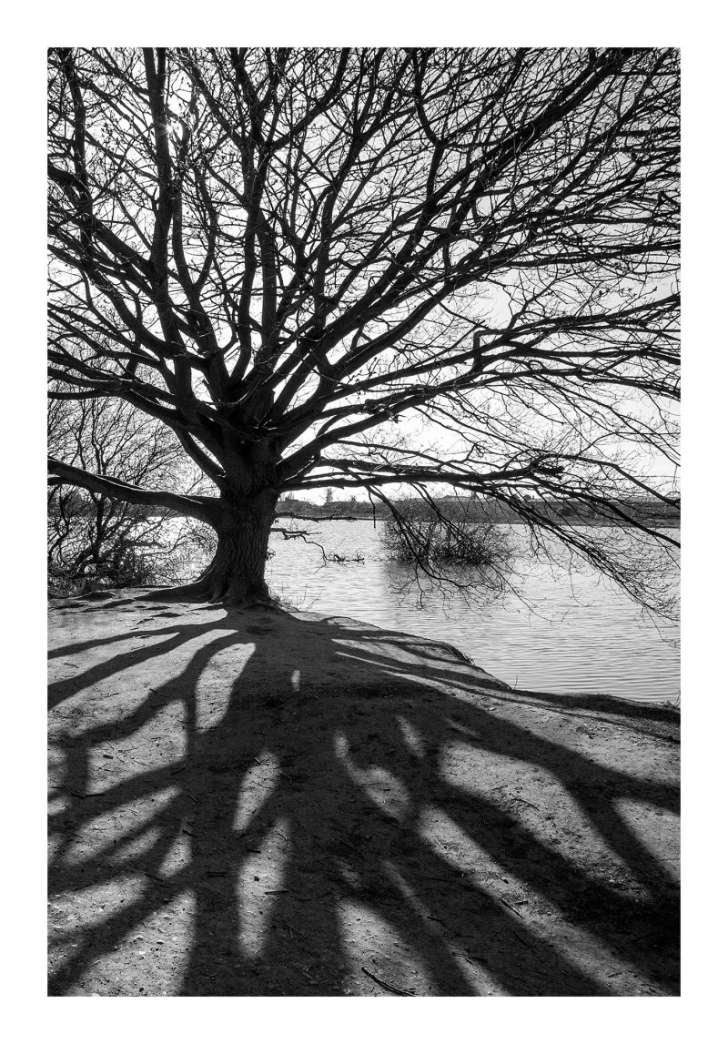 shadows trees attenborough lake