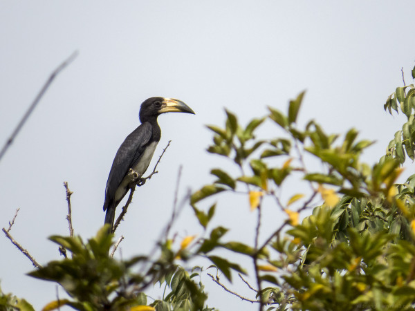 gambia birds wildlife landscape travel nature envi
