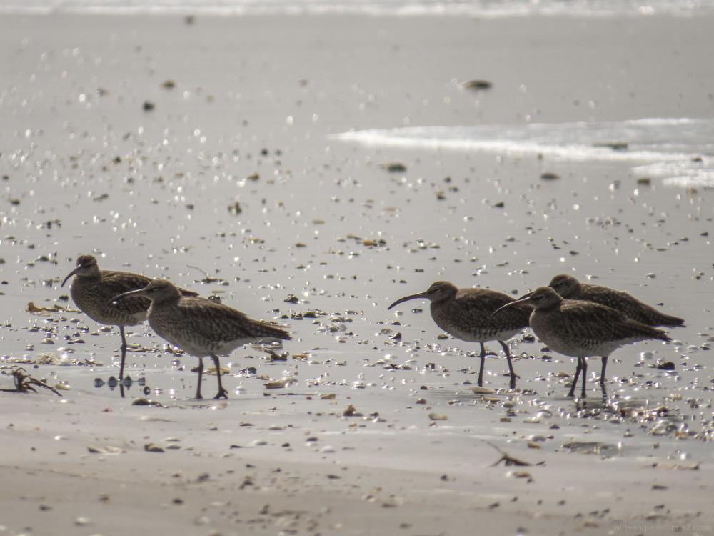 gambia wildlife birds landscape nature
