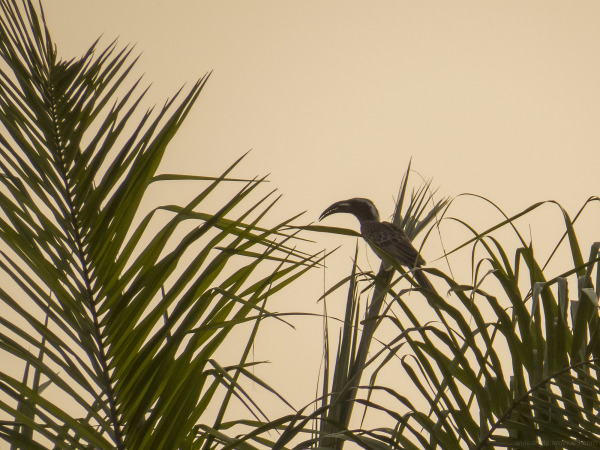 gambia wildlife birds landscape nature