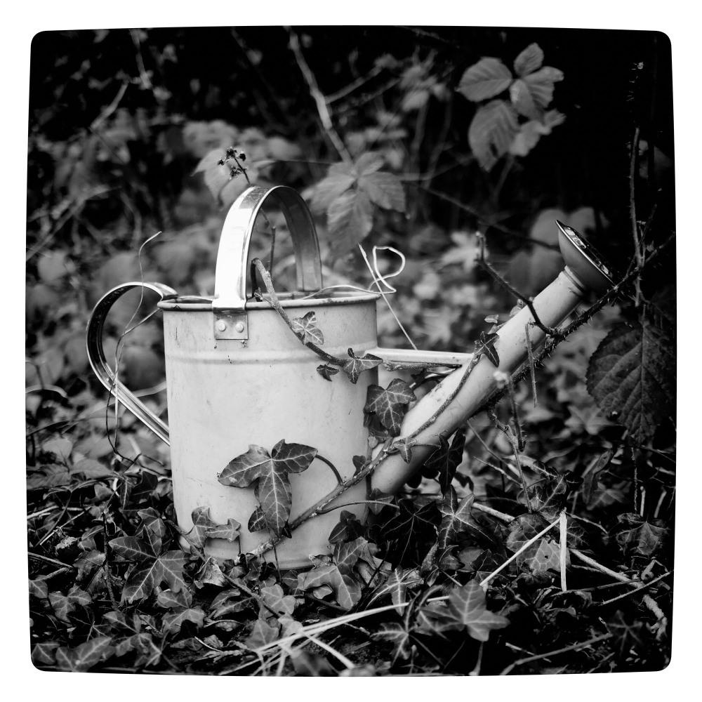 watering can still life garden