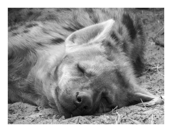 Blessed Sleep