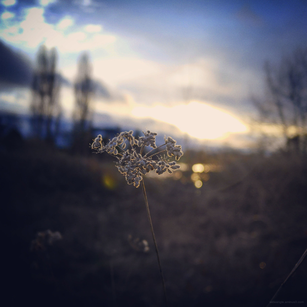 sunset shardlow march spring golden