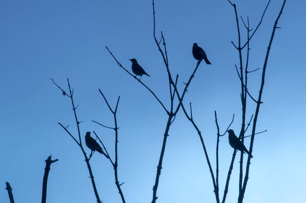 birds tree scotland