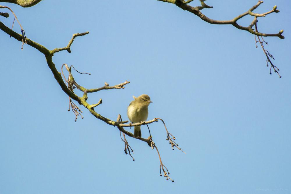 birds tree shardlow