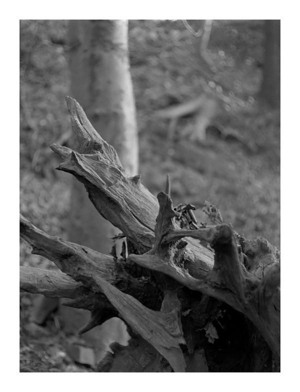 olympus penF 35mm b&w film developer half-frame