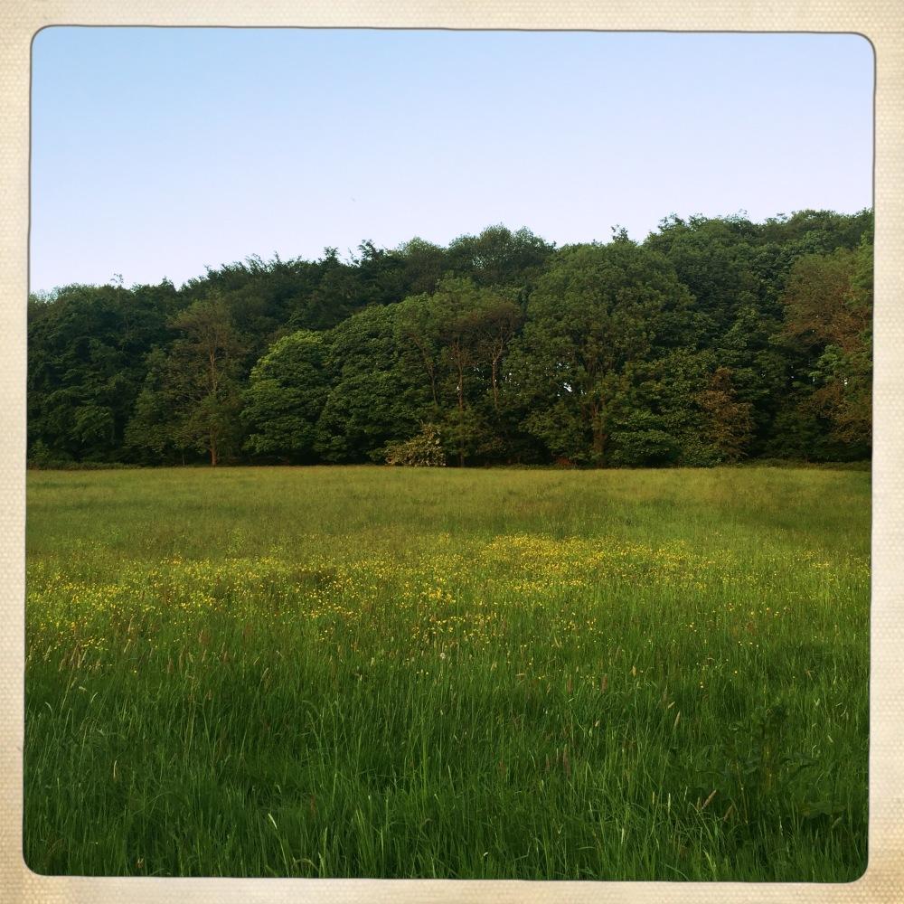 belper walks lush fields