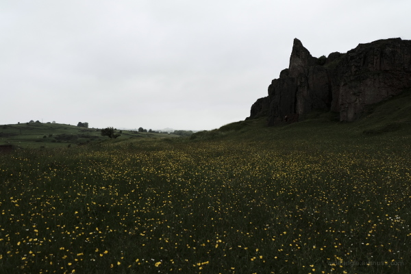 dark field dragons derbyshire buttercups rocks
