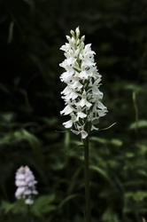 derbyshire flowers summer blooms nature