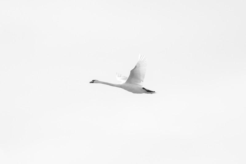 birds flight sillhouettes